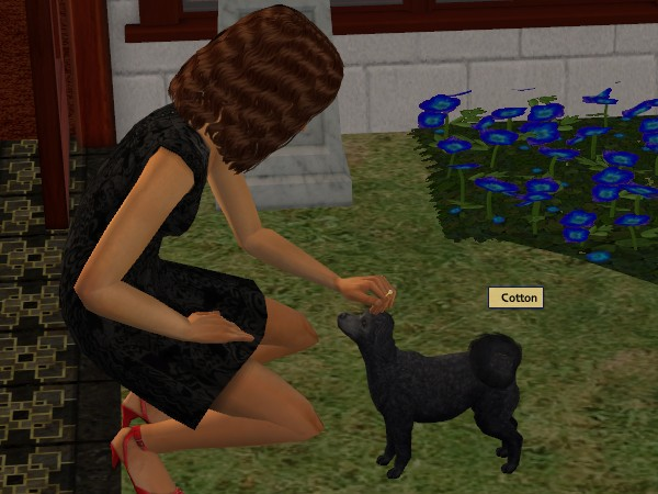 Kylie adopts a stray poodle into the family